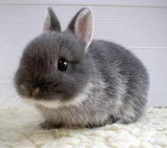Looks like my baby bunny from so many years ago. I sure do miss him