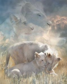 belles images animaux sauvages - Page 7