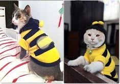 Bee Clothing For Your Cat
