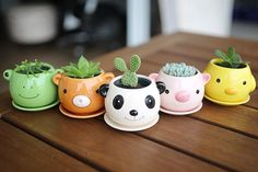 Raising the mood for trifles: 18 original pieces - Uplifting the little things: 18 original flower pots – Inspiration - Succulent Pots, Cacti And Succulents, Planting Succulents, Potted Plants, Indoor Plants, Planting Flowers, Planter Pots, Cactus Plante, Plants Are Friends