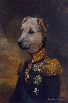 King of the Lakeland Terriers posing for this beautiful dog portrait dressed in full military uniform with medals #Lakelandterrier #yourpetinuniform
