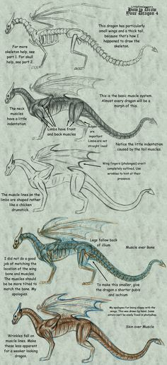 "This is my guide to dragon anatomy. It is not a traditional tutorial that shows you step-by-step, ""here's how to draw this picture of a dragon"", because nobody ever learned anything from that, and . Fantasy Dragon, Dragon Art, Drawing Lessons, Drawing Techniques, Fantasy Creatures, Mythical Creatures, Animal Drawings, Art Drawings, Dragon Anatomy"