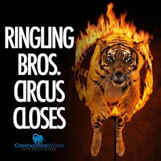 closes after 146 years! So happy! After countless of protests many of us have done, the day has finally come! Ringling Bros Circus, Barnum Bailey Circus, Not My Circus, Animal Protection, Animal Rights, Zoo Animals, Animal Rescue, Pets, Instagram Posts