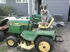 Jeb, the John Deere driving Dingo :-)