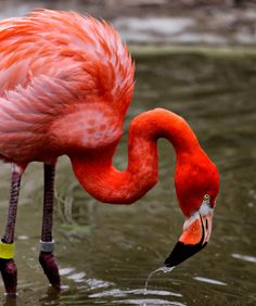 Flamingo by H. Powers | Flickr - Photo Sharing!