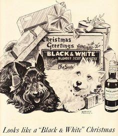 Chiens 'Whisky Black & White' - Publicité Vintage