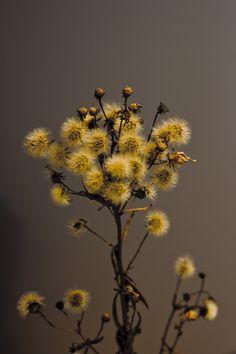 Kukkia pörrönö.