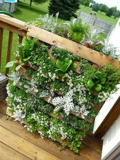Vertical garden - railing roof top
