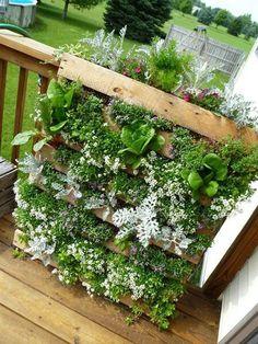 Vertical garden - railing roof top