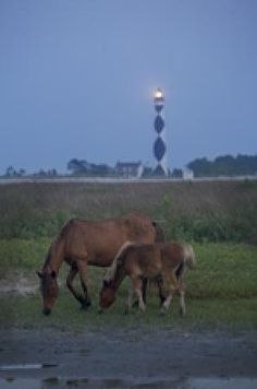 Places to go around Beaufort NC - Picture of Boardwalk Cafe / Soda ...