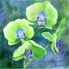 Orchids One by Joan A Hamilton on ARTwanted