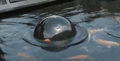 Floating fish dome out of water lets your fish take a peek over the surface!