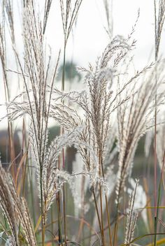 Alpine Meadow, Ornamental Grasses, Mother Earth, Most Beautiful, Leaves, World, Flowers, Florals, The World