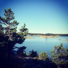 hannahkc: The Stockholm archipelago.    Tree porn is in Sweden. Which seems utterly appropriate.       #landscape#sweden