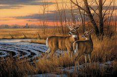 "Rosemary Millette Original Acrylic Painting:""Daybreak-Whitetail Deer"" - Rosemary Millette"