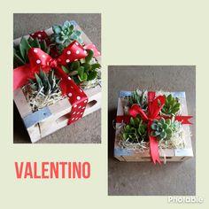 Succulent mix gift box