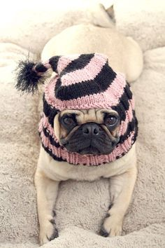 A pink and black hat for a PUG! My daughter LOVES pugs, I saw this and had to pin it.