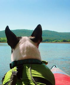 Kayaking is relaxing and great exercise!