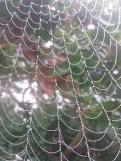 Itap of a spiders web on a cool foggy morning http://ift.tt/2iCsnC5