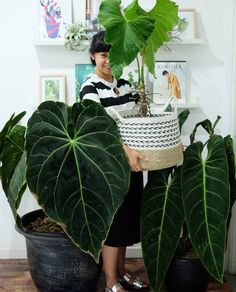 Planting Succulents, Planting Flowers, Mid Century Landscaping, Philodendron Monstera, Ferns Garden, Cactus, Plants Are Friends, Green Life, Plant Design