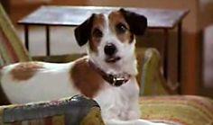 Love Eddie from Frasier