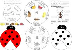 p_mariquitahormiga Activities For 5 Year Olds, Sunday School Activities, Montessori Activities, Preschool Worksheets, Family Party Games, Indoor Games For Kids, Science, Eric Carle, Bugs And Insects