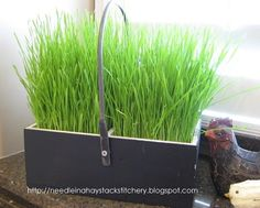 Needle in a Haystack: Grow Your Own Easter Grass!