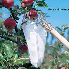 Fruit Picker from Lee Valley Great idea for fruit trees and I kind of love they dont include the pole in the price. The post Fruit Picker from Lee Valley appeared first on Best Of Likes Share. Vegetable Garden, Fruit Trees, Garden Tools, Organic Gardening, Fruit Garden, Garden Tags, Garden, Gardening Tips, Garden Projects