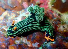 14 pequeñas y coloridas criaturas del mar | Notas | La Bioguía