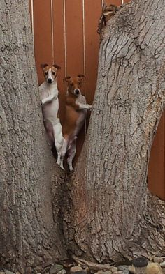 jack russells trees dogs