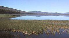 Davis Lake, Oregon, hawg heaven