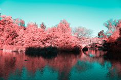 Infrared Photos of NYC's Central Park as a Psychedelic Dreamland