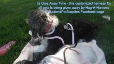 Its Give Away Time : We are giving away a customized harness for your pet, you can find the all information on this link : http://gvwy.io/uwebt5b Good Luck