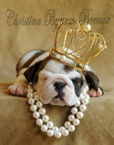 Crown Pup