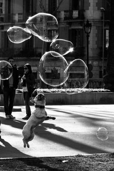 There is no Angry Way to Say Bubbles! ~W.N. deeeepwaters.tumblr.com