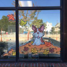 Boston terrier window painting, Union Square Veterinary Clinic.