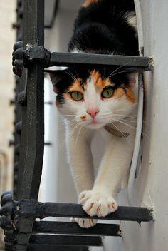 Cat in a window in Cuenca, Spain.