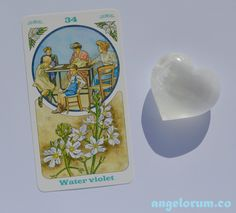 Water Violet Bach Flower Remedy - Bach Flowers Oracle by Lo Scarabeo