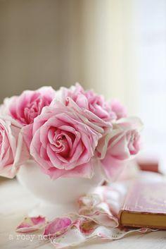 Flor do Dia nº 20