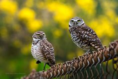 As a bird photographer, I've continued to get the question, &qout;I have two birds in the photo, but only one is in focus. How do I get both birds, particularly the eyes, in focus?&qout; A fair question. When photographing birds, we need fast shutter speeds which typically goes hand in hand with bigger apertu…