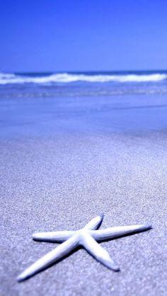 Starfish, Beautiful, Beaches, Natural