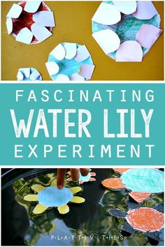 Fascinating Paper Experiment For Kids paper water lily experiment. Kids will love this creative way to discover and learn about water absorption and plant life and water balance and differential growth of cells Educational Activities For Kids, Preschool Science, Craft Activities For Kids, Science For Kids, Preschool Activities, Projects For Kids, Crafts For Kids, Water Crafts Kids, Water Kids