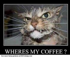 Where's my coffee #meme #funny #lol #cat