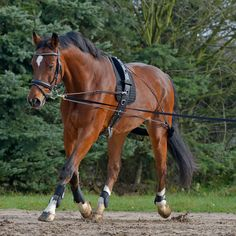 Spring into your Monday with a NEW Waldhausen lunging system! Designed to encourage balance and gradual build up of the topline.