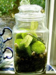 I would add terrariums, too!  These can represent different biomes, such as moss for woodlands, open desert terrariums, open terrarium with venus fly trap for boglands, air plants for epiphytes, etc.