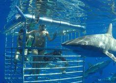 Day 7: wake up early and experience a Hawaiian Sharks | Hawaii Shark Adventure. I've done this. It's amazing