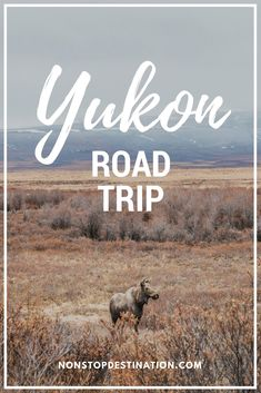 Yukon road trip The Allure of the North Where to go where stay what do wildlife viewing yukon canada roadtrip spring photography Road Trip Essentials, Road Trip Hacks, Canada Travel, Travel Usa, Alaska Travel, Paris Travel, Travel Guides, Travel Tips, Ontario