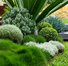 hof landschaften Concord 'Coral' Garden and Succulent Landscaping, Front Yard Landscaping, Succulents Garden, Landscaping Ideas, Backyard Patio, Coral Garden, Tropical Garden, Tropical Pool, Green Garden
