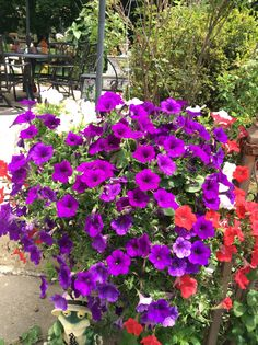 Hanging basket with purple, red and white petunias.