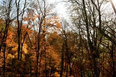 fall on the katy trail